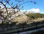 divinoand blossom